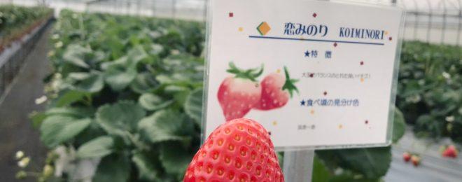 福岡春のデートにおすすめ!イチゴ狩り